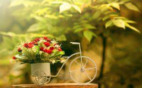 Феерия цветов в одном салоне в Харькове