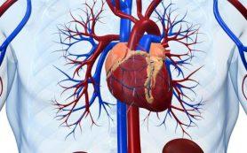 Атеросклероз сосудов сердца: фактор риска рака предстательной железы