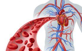 Недостаток магния приводит к заболеваниям сосудов
