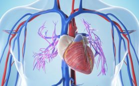 В Германии разработан подход к лечению диастолической сердечной недостаточности