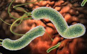 Появление паразитов в организме человека. Симптомы и защита
