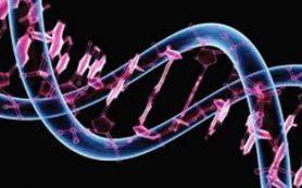 Ученые нашли ген, способный защитить от сердечно-сосудистых заболеваний