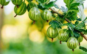 Названа самая полезная ягода для здоровья сердца и сосудов