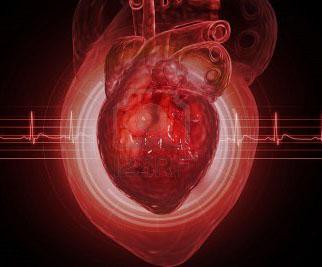 Важна ли процедура УЗИ сердца