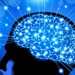 Больше половины людей верят в мифы о работе мозга