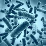Бактерии-киборги