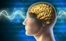 Ученые подсказали, какой сок заставит мозг работать эффективнее, а в старости убережет от деменции