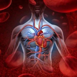 Ученые создали легочный каркас из кровеносных сосудов