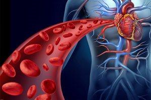 Кровеносные сосуды названы терапевтической мишенью для диабета