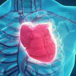 Обнаружен белок сердечной недостаточности