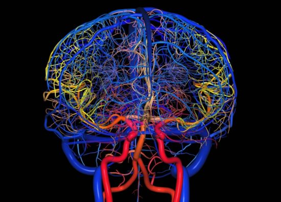 КТ-ангиография поможет спрогнозировать сердечно-сосудистые нарушения