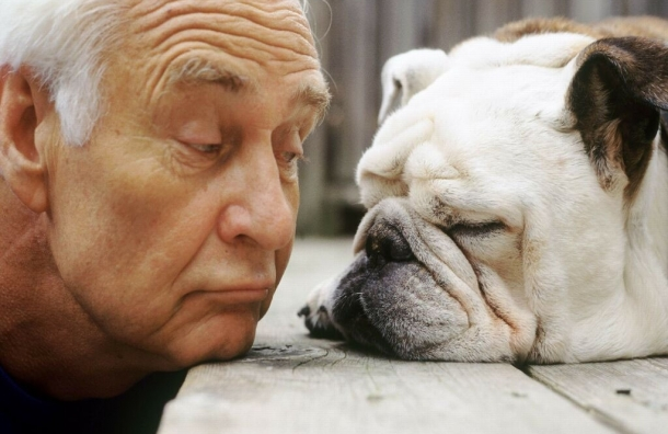 Владельцы собак меньше подвержены риску сердечно-сосудистых заболеваний