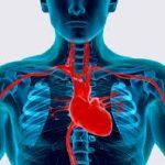 Безопасность в отношений сердечно-сосудистой системы