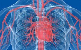 Благодаря особой игле сердце можно будет просматривать изнутри во время операции