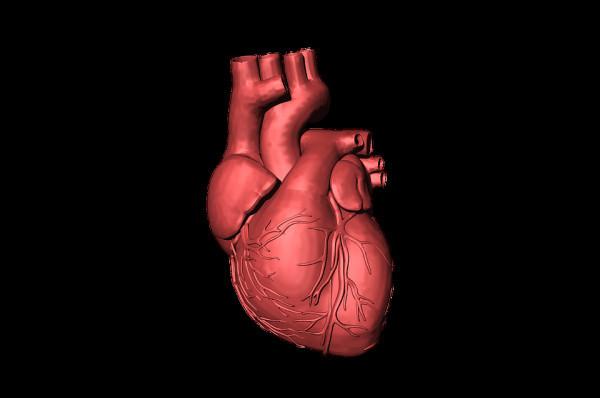 Шведская компания разрабатывает искусственное сердце, работающее, как настоящее