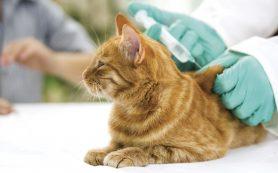 Нужно ли прививать кошку?