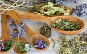 Травы для разжижения крови и укрепления стенок сосудов: полезные свойства трав