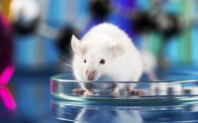 Физическая активность омолодила сердце взрослых мышей