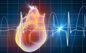 Сколько ударов сердца отведено вам?