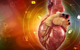 Исследователи создали сердце из стволовых клеток