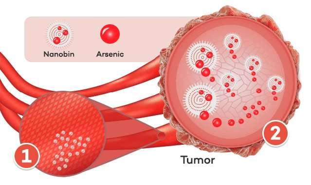 Американские ученые предложили лечить рак мышьяком