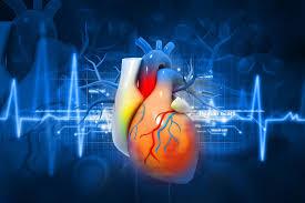 Российские ученые научились хранить донорское сердце до суток