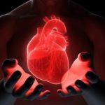 Новый протеин может способствовать регенерации сердца после приступа