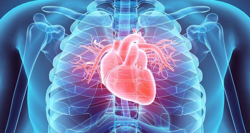 Рекордная трансплантация: воскрешение умирающего сердца