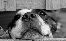 Особенности лечения заболеваний у животных