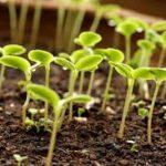 Выбор и использование удобрений на приусадебном участке