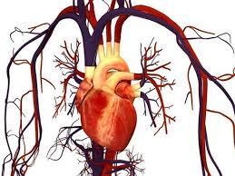 Риски для сердечно-сосудистой системы при работе с неразрушающим контролем