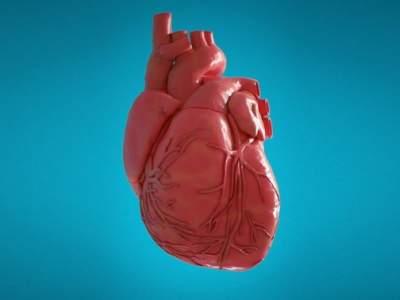 Тренировка сердца
