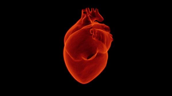 Искусственное сердце успешно протестировали в России