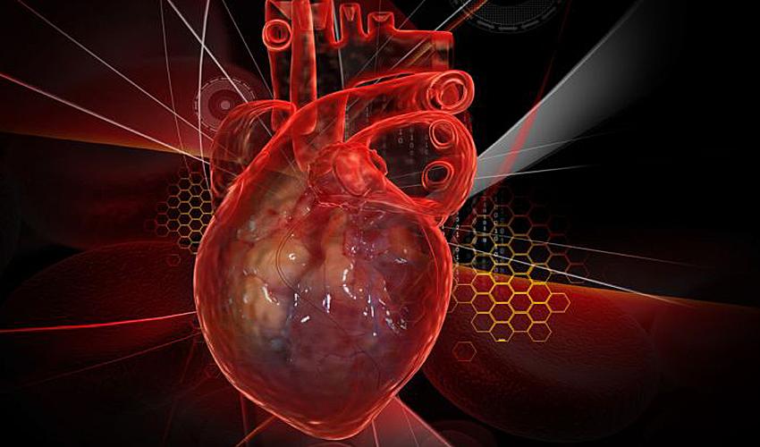 «Сердце в пробирке» поможет тестировать лекарства