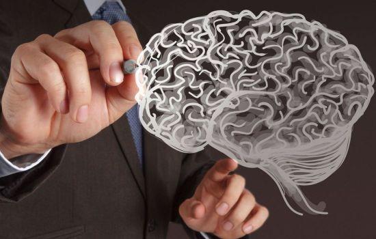 Как нервные клетки находят «свое место» в растущем мозге?