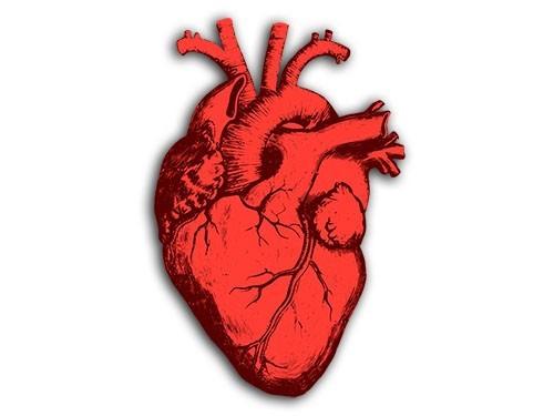 Источник молодости сердца нашли в кишечнике