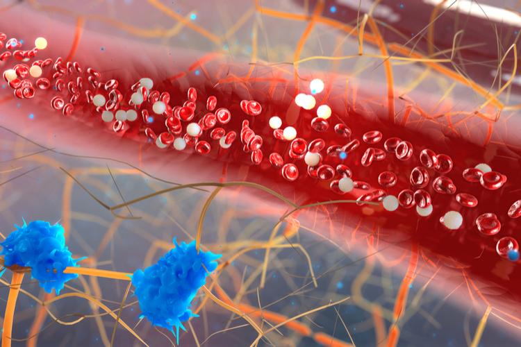 Ученые поняли, как природа управляет движением крови