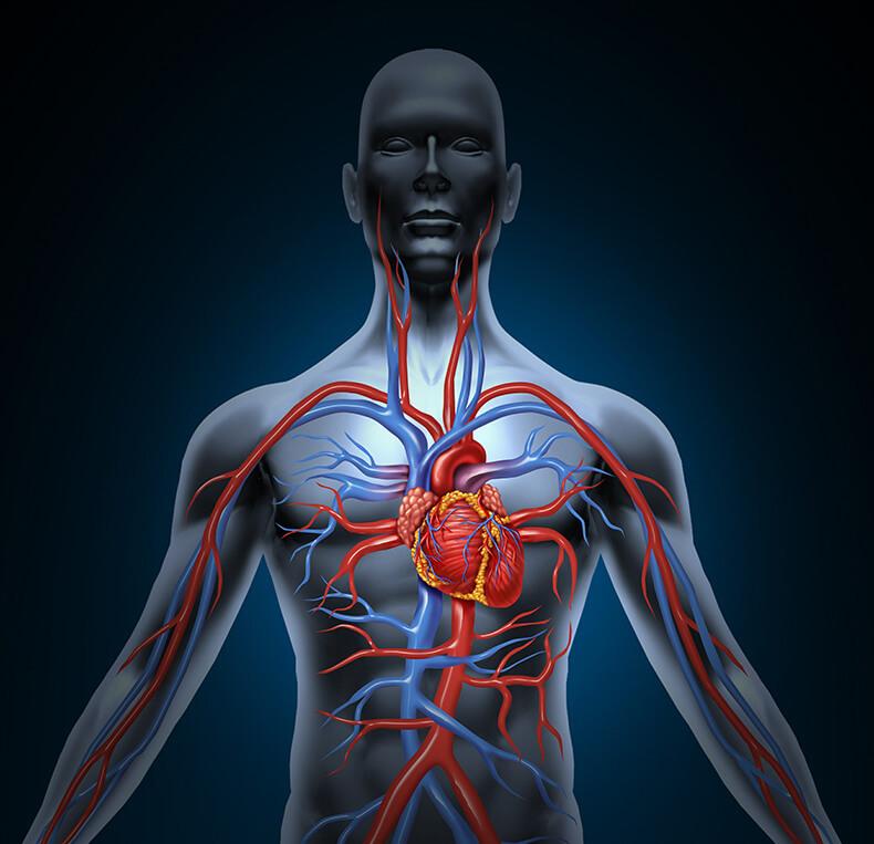 Эндокринные гипертензии: Гормоны могут быть причиной повышенного давления