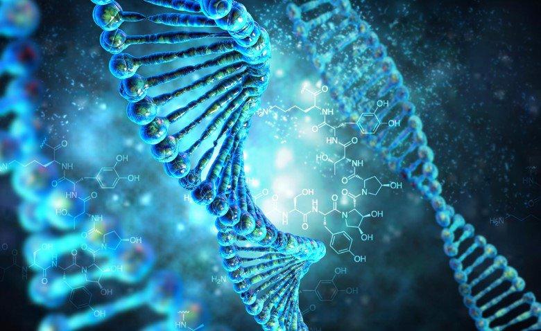 Как провести ДНК экспертизу?