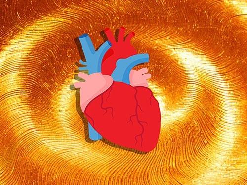 Тренировка сердечно-сосудистой системы