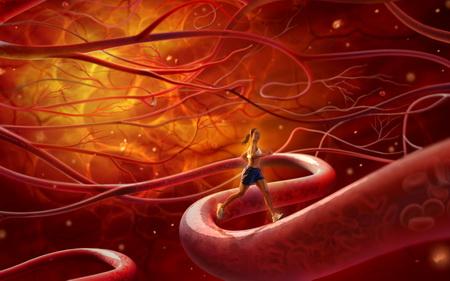 Здоровье кровеносных сосудов защищают гены