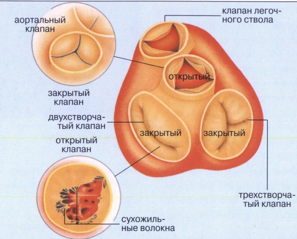 Полулунный клапан