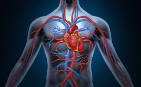 Атриовентрикулярная блокада : степени, причины, симптомы, ЭКГ