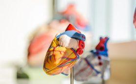 О чем может рассказать сердце человека?