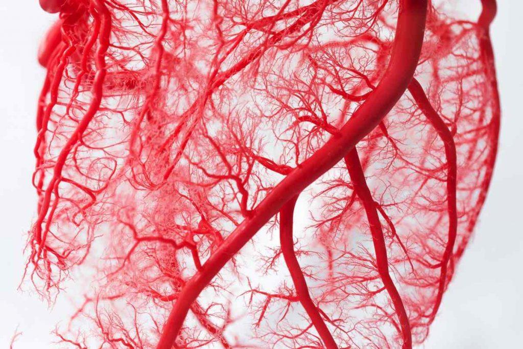 Кровеносные сосуды — дорога жизни